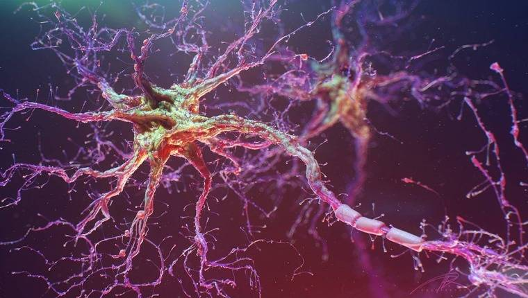 Что делает нейрон