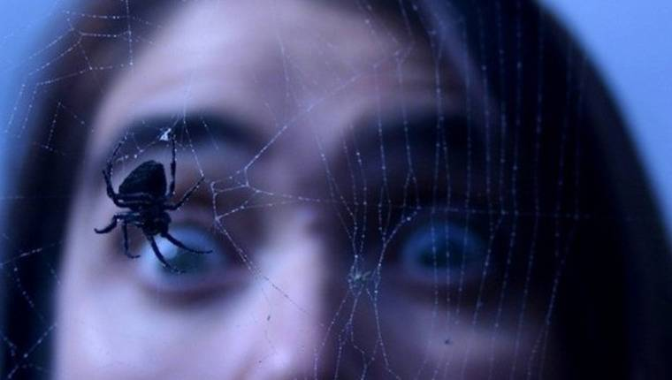 О пауках и страхах